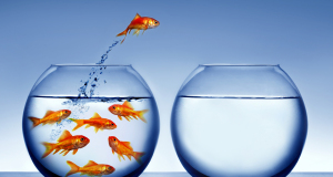 bigstock-goldfish-jumping-out-of-the-wa-52418623